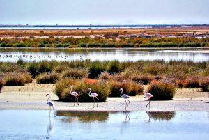 organizar un viaje de fin de curso a Doñana