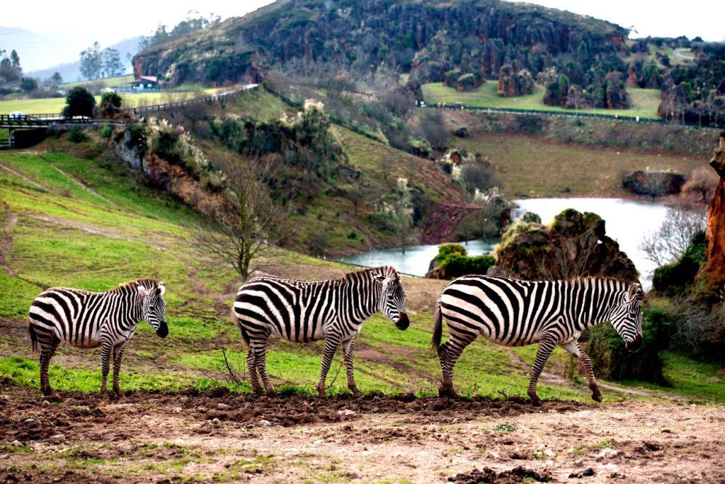 visitas para un viaje de fin de curso a Cantabria